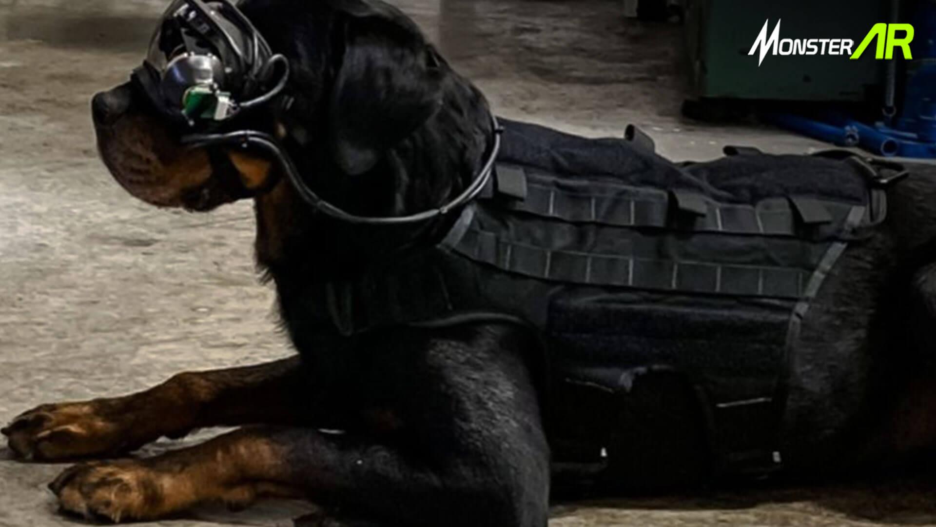 Kacamata AR Pelatihan Anjing Militer